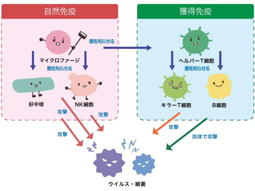 自然に免疫システムを高める方法