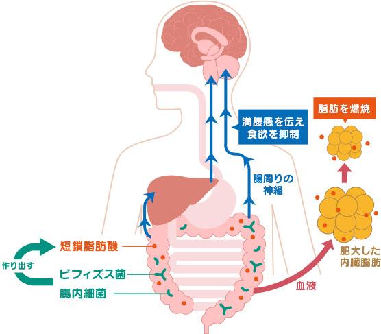 短鎖脂肪酸