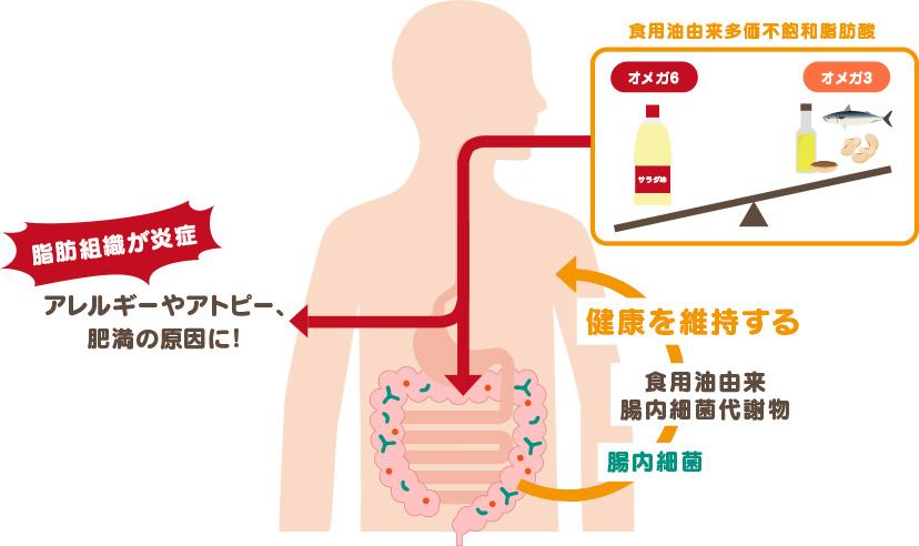 オメガ6系/オメガ3系脂肪酸バランスの破綻