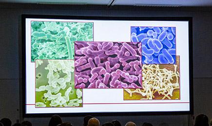 ヒトの腸内細菌の一例
