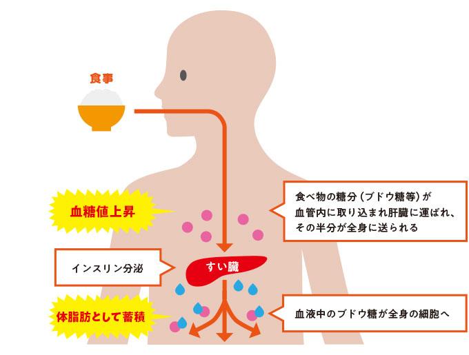 食べ物の糖分(ブドウ糖等)が血管内に取り込まれ肝臓に運ばれ、その半分が全身に送られる インスリン分泌 血液中のブドウ糖が全身の細胞へ